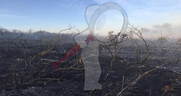 Controlan incendio de reserva forestal en TX