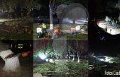 """Denuncian ciudadanos """"ecocidio"""" en San Juan del Río"""