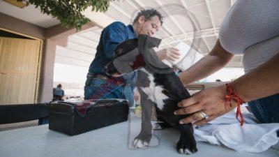 Promueven Jornadas de Vacunación Antirrábica de perros y gatos en SJR