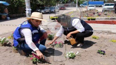 Realizan jornada de plantación de árboles y arbustos