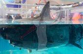 China presenta drones espía estilo tiburón