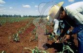 Aplican en el campo mexicano 7 mil 713 mdp: AMLO