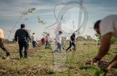 Más de 10 mil árboles plantados en programa de reforestación