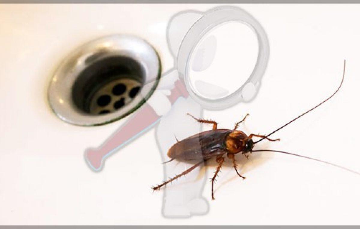 Super Cucarachas, la plaga mas resistente