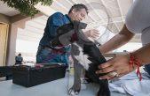 Alistan nuevas instalaciones para Cuidado Animal en SJR
