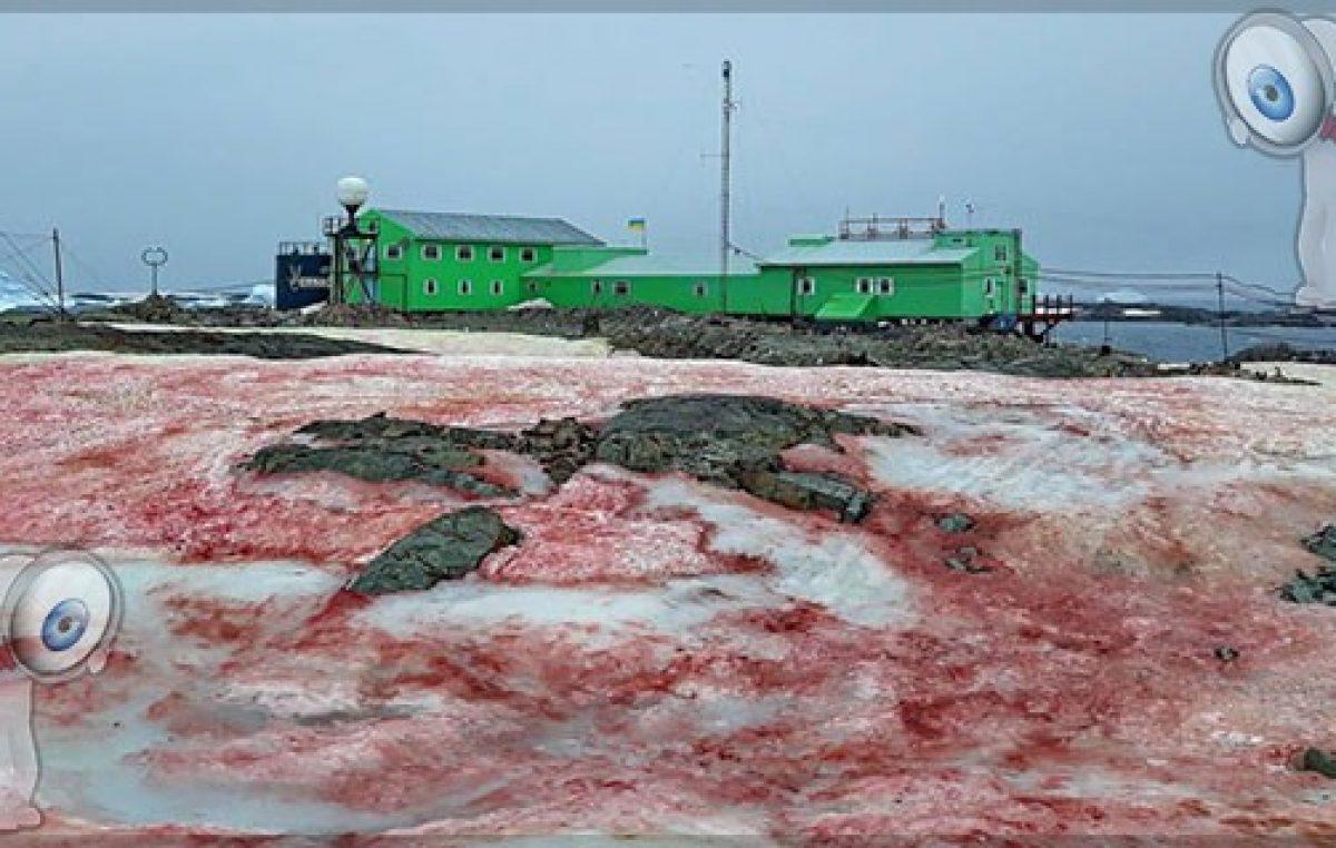 """Aparece """"nieve de sangre"""" en la Antártida"""