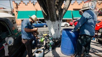 Inicia proceso de rescate de árbol en Plaza Independencia