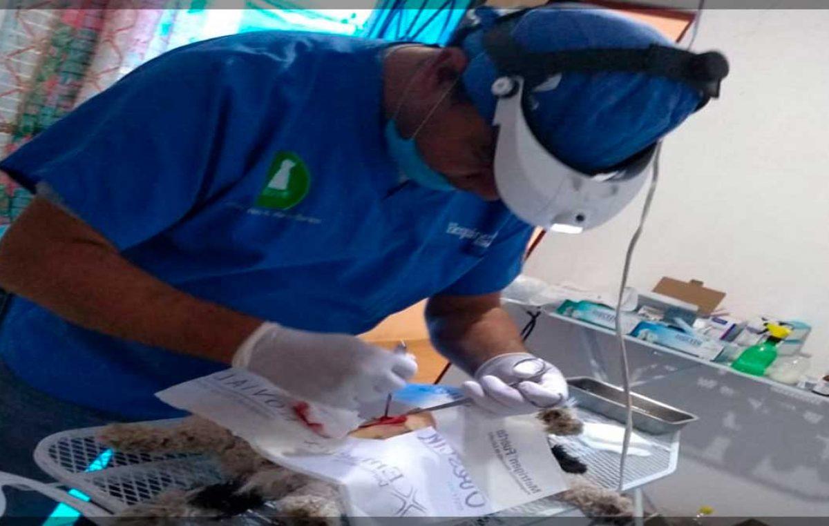 Control Animal continúa con esterilización y desparasitación