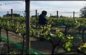 Informa ST de dos casos de COVID-19 en trabajadores temporales en Canadá