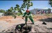 Realizan reforestación por Día Mundial del Medio Ambiente