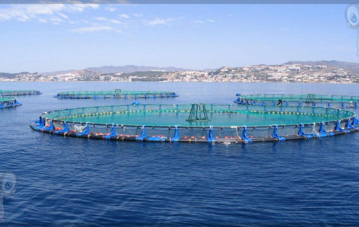 La acuicultura del presente, la alimentación del futuro