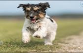El sobrepeso en mascotas, un problema en aumento