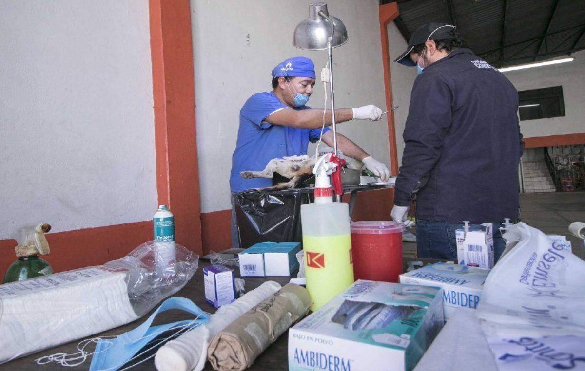Prepara Unidad de Control Animal campaña de esterilización