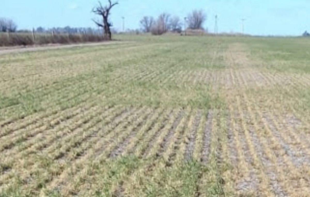 En riesgo ciclos agrícolas ante falta de lluvias y escasa reserva de agua en presas